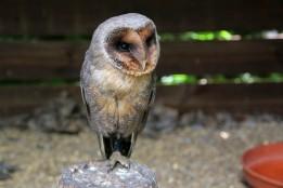 owl-11