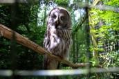 owl-13
