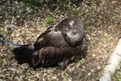owl-14