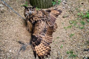 owl-21