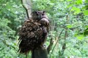 owl-23