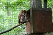 owl-24