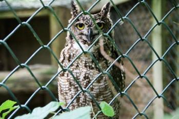 owl-26
