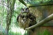 owl-29