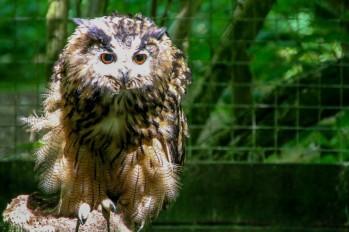 owl-32