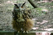 owl-33