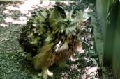 owl-34