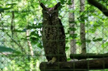 owl-35