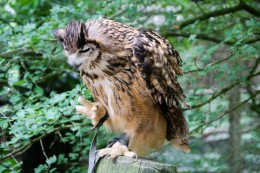 owl-36