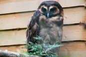 owl-38
