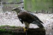 owl-42