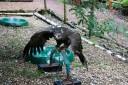 owl-45