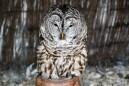 owl-46