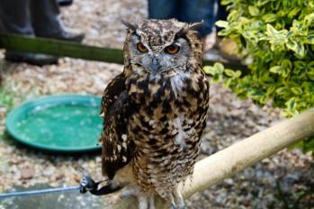 owl-47