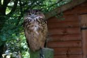 owl-8