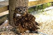 owl-9